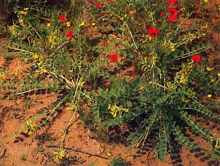 Бромелиевые  Растения и цветы